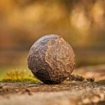 tilt shift lens photography of stone